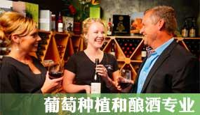 新西兰留学-葡萄种植和酿酒专业